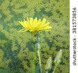 Small photo of Yellow leavy hawkweed (Hieracium umbellatum). Vintage floral background. Layer overlay effect.