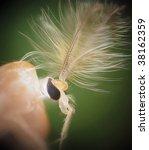 Small photo of Chironomidae midge