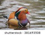 Mandarin Duck  Lazienki Park ...
