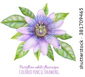 passion fruit flower with leaf. ... | Shutterstock . vector #381709465