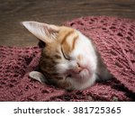 Stock photo cute ginger kitten sleeps under a knitted soft blanket 381725365