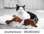 Beautiful Cat And Dachshund Do...