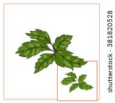 basil leaves  vector... | Shutterstock .eps vector #381820528