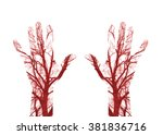 close up human blood vessels in ... | Shutterstock . vector #381836716