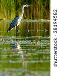 grey heron  ardea cinerea  on a ... | Shutterstock . vector #38194582