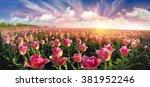 field with tulips ukrainian... | Shutterstock . vector #381952246