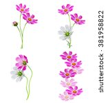 cosmos flowers isolated on... | Shutterstock . vector #381958822