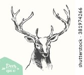 sketch of a deer head  vintage... | Shutterstock .eps vector #381974266