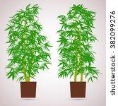 bamboo indoor. color planting... | Shutterstock .eps vector #382099276