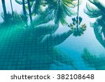 Reflection Of Coconut Trees An...