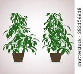 ficus indoor. color planting of ... | Shutterstock .eps vector #382156618