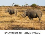Two Rhino Standing On A Open...