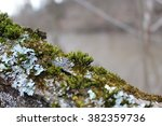 moss  leaf on moss  moss autumn ... | Shutterstock . vector #382359736