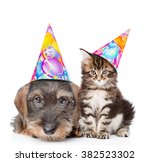 Stock photo cat and dog in birthday hats looking at camera together isolated on white background 382523302