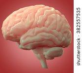 human brain anatomy | Shutterstock . vector #382557535