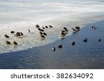 ducks on ice shelf | Shutterstock . vector #382634092