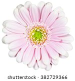 Pink Flower On Isolated...