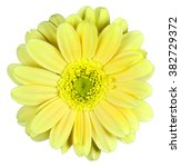 Yellow Flower On Isolated...
