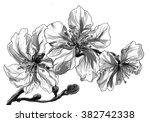 almond tropical flowers in... | Shutterstock . vector #382742338