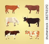Set Of Different  Breeds Cows ...