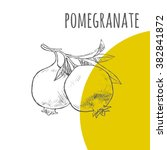 pomegranate vector freehand... | Shutterstock .eps vector #382841872