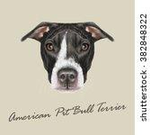 american pit bull terrier... | Shutterstock .eps vector #382848322