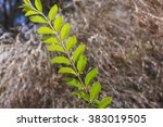 a composition with a twig in... | Shutterstock . vector #383019505