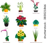illustration of houseplants ... | Shutterstock .eps vector #383021866