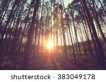 sunny beams in the forest | Shutterstock . vector #383049178