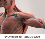 Human Anatomy Detail Of...