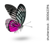 beautiful pink butterfly lower... | Shutterstock . vector #383062396