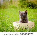 Small Gray Kitten On Wood Box ...
