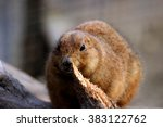 little animal | Shutterstock . vector #383122762