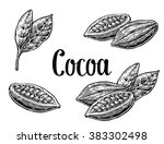 cocoa bean and leaf. hand... | Shutterstock .eps vector #383302498