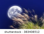 Japanese Pampas Grass And The...