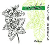 hand drawn melissa with leaves... | Shutterstock .eps vector #383429782