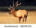 elk   Shutterstock . vector #38345191