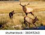 elk | Shutterstock . vector #38345263