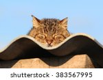 Stock photo cat sleeping on the roof basking in the sun and sunbathing 383567995
