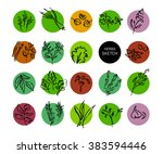 vector hand drawn fruits sketch.... | Shutterstock .eps vector #383594446