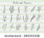 set of herbs and fowers in... | Shutterstock .eps vector #384241438