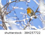 Snow And Cute Bird Robin...