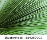 Giant Green Leaf Striation...