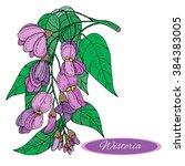 hand drawn wisteria flower... | Shutterstock .eps vector #384383005