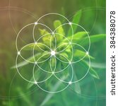 sacred geometry. mathematics ... | Shutterstock .eps vector #384388078