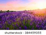 sunset over a violet lavender... | Shutterstock . vector #384459355