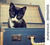Stock photo kitten in vintage suitcase cute picture in retro style 384466006