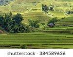 Beautiful Rice Paddy Field...