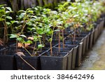 planting green plants on moss... | Shutterstock . vector #384642496