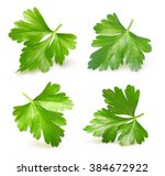 parsley herb isolated on white... | Shutterstock . vector #384672922